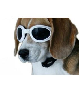 Lunettes de soleil Lunette de soleil pour chien  9,00€