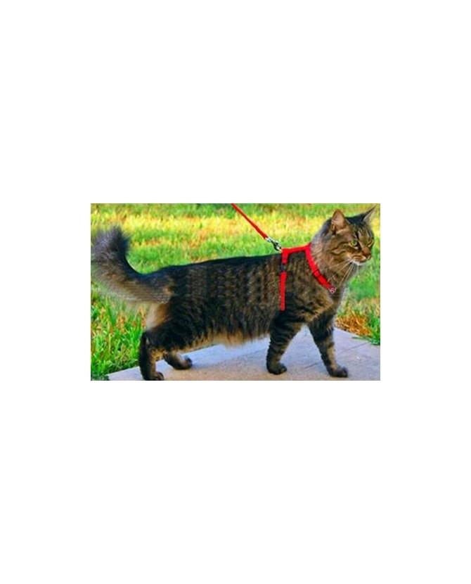 Harnais pour chat Harnais rouge pour chat  3,00€