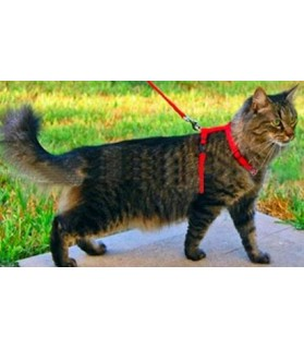 laisses colliers et harnais Harnais rouge pour chat  3,00€