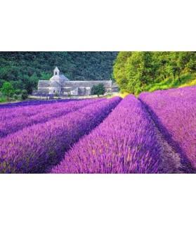 Peintures fleurs au naturel Poster champ de lavande Chez Anilou 17,00€