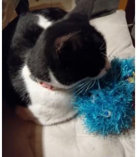 peluches pour chat jouet chat - le Coutchff Chez Anilou 12,00€