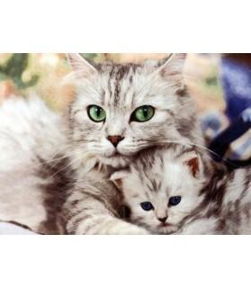 Peintures sur les chats Tableau Chat et son chaton Chez Anilou 15,00€