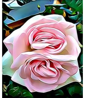 Peinture la double Rose rose
