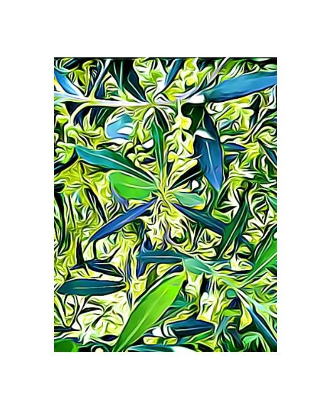 Peintures fleurs au naturel peinture Fleurs d'oliviers Painting DLX Chez Anilou 15,00€