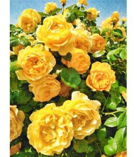 Peintures fleurs au naturel Tableau Bouquet de roses jaunes Chez Anilou 15,00€