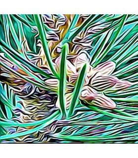 Peinture le bourgeon de pin