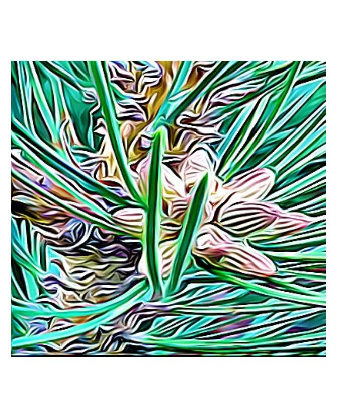 Peintures fleurs au naturel Peinture le bourgeon de pin Chez Anilou 15,00€