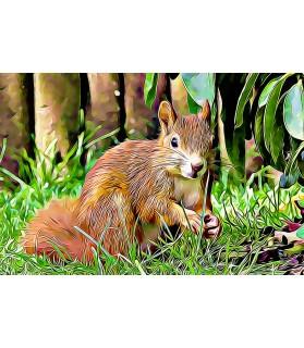 Poster animalier ChezAnilou Tableau L'écureuil Chez Anilou 15,00€