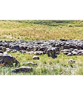 Poster animalier ChezAnilou Tableau Le troupeau de brebis Chez Anilou 17,00€
