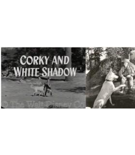 Livres canins 30 années au côté du berger blanc suisse VN  22,90€