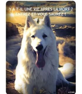 Berger blanc suisse Pancarte chien de garde 1PB Chez Anilou 15,00€