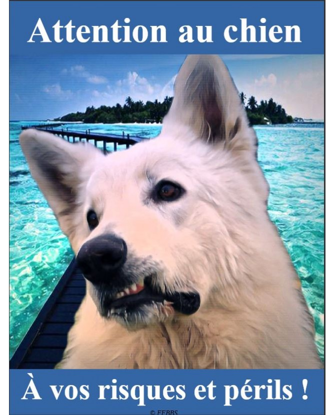 Berger blanc suisse Pancarte chien de garde 2PB Chez Anilou 15,00€