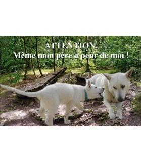 Pancartes Berger blanc suisse Pancarte chien de garde 3PB Chez Anilou 15,00€