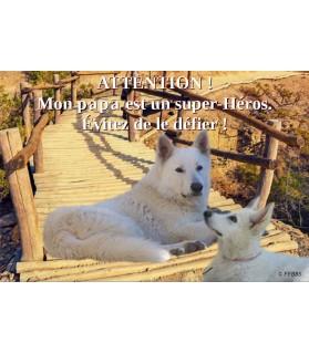 Berger blanc suisse Pancarte chien de garde 4PB Chez Anilou 15,00€