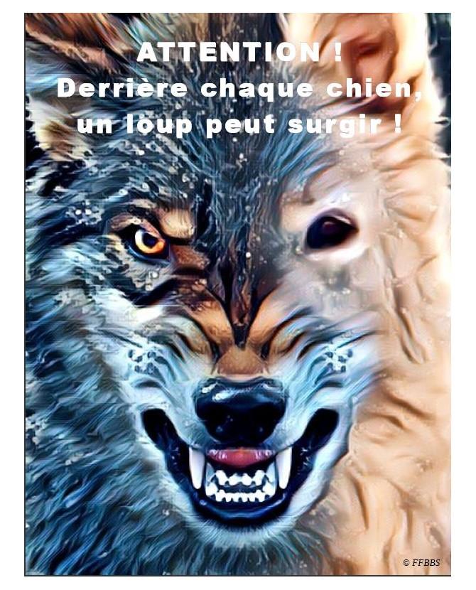 Pancartes Berger blanc suisse Pancarte chien de garde 5PB Chez Anilou 15,00€