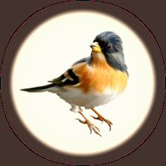 produits pour oiseaux